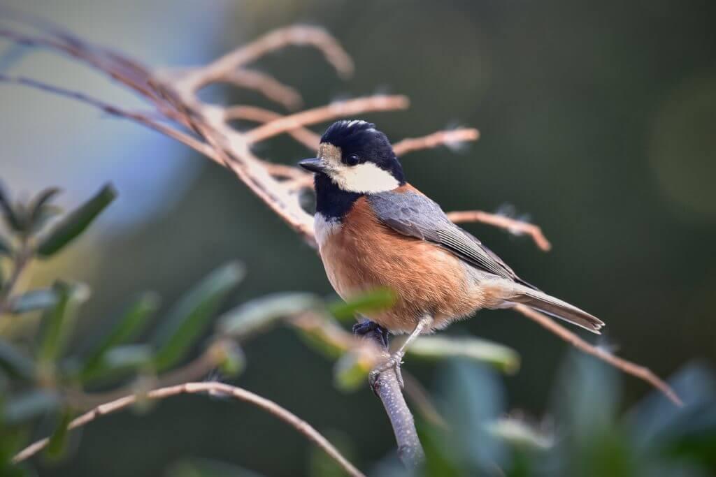 渡鳥の楽園