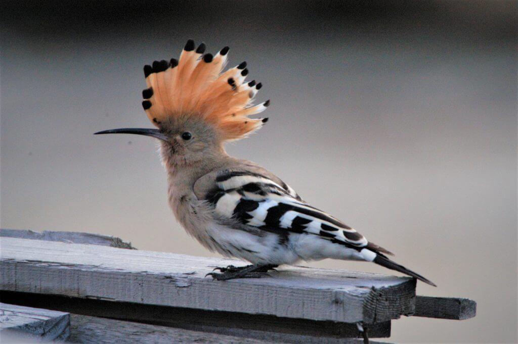 鳥を眺める