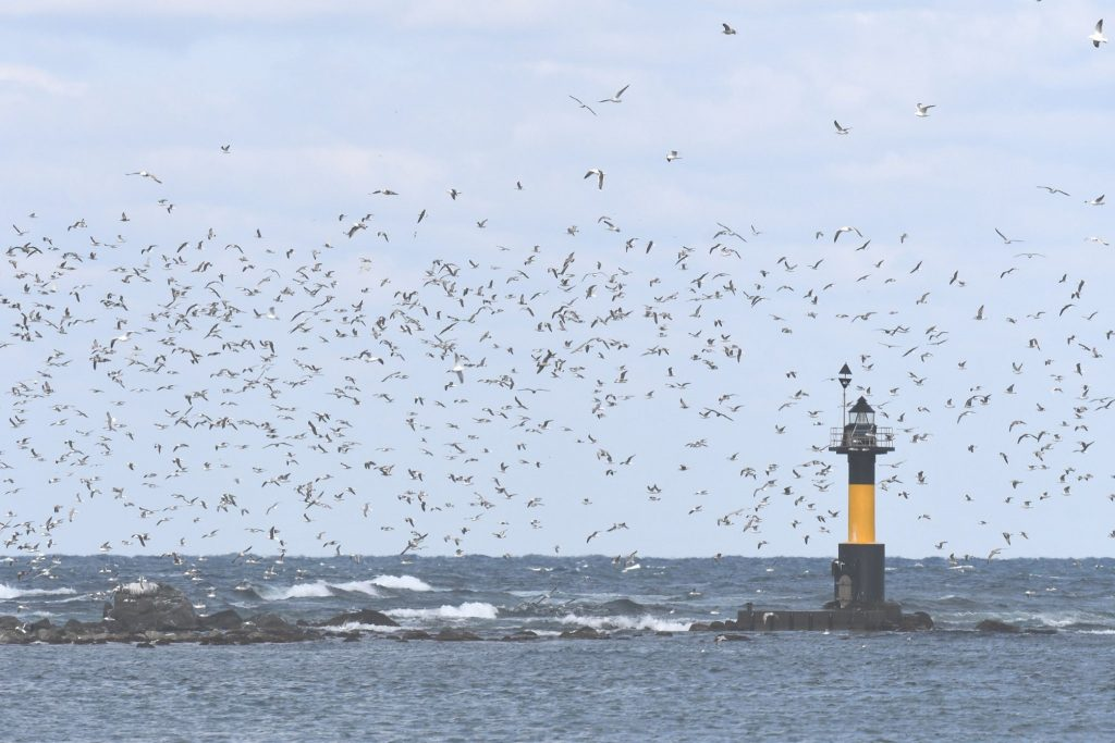 海鳥の楽園が始まる