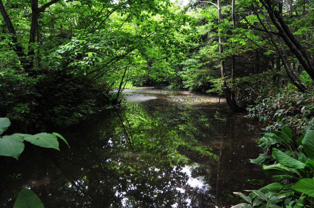 国の天然記念物の森