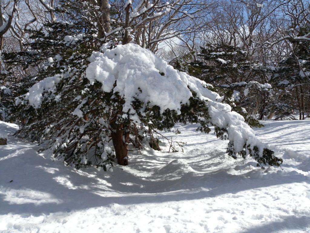 日本海からの吹きすさぶ強風と雪の重み