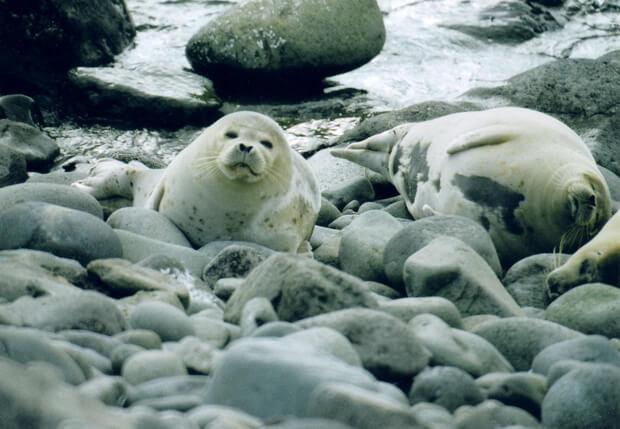 冬に訪れる海獣たち