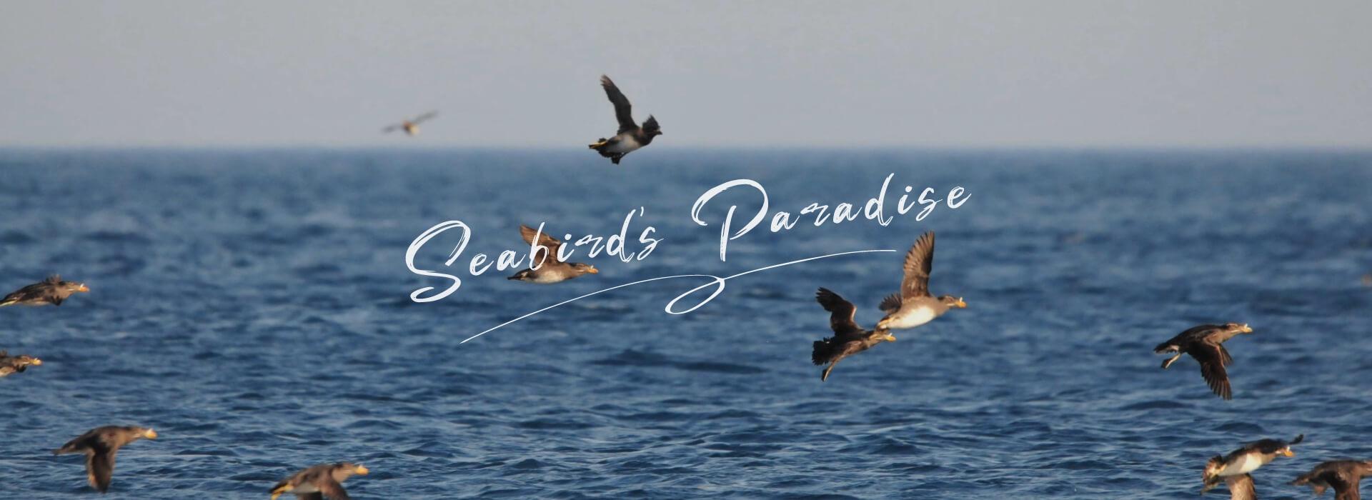海鳥の楽園