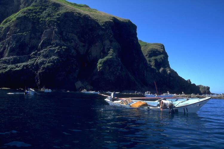 天売島の夏